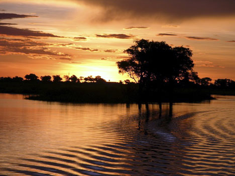 Safary honeymooning in Botswana